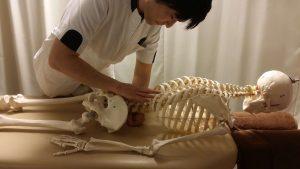 腹圧の検査(骨格模型)